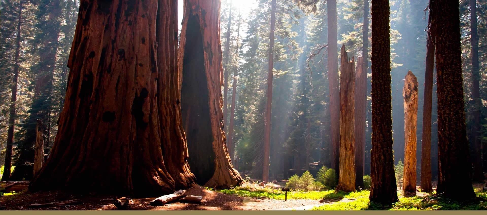 Explore the redwoods